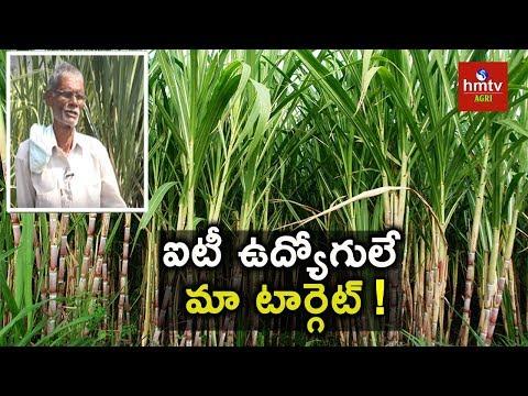 Sugarcane Cultivation Tips | NATURAL FARMING | hmtv Agri