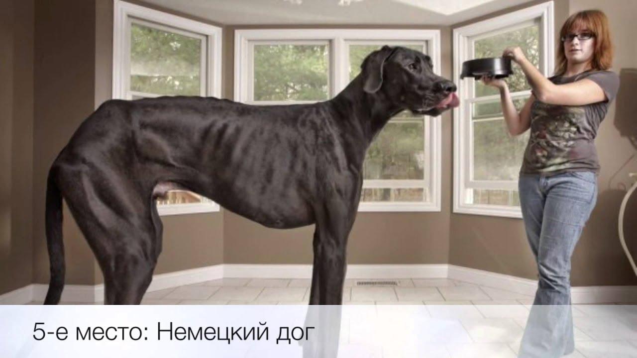 больших собак разных пород