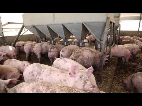 Housing Pigs...current Approaches