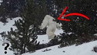 Is The Abominable Snowman Real?