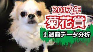 【1週前G1予想】2017年 菊花賞のデータ分析動画【星野るり】