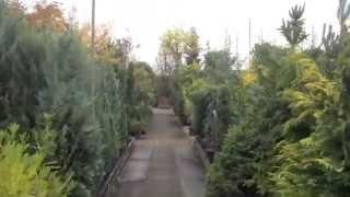 Sam arbuste