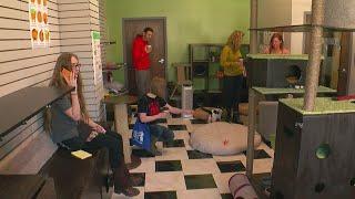 Minnesota's First Cat Café Opens In Uptown