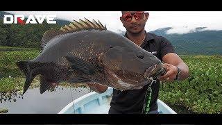 Download Lagu DRAVE ONE-R SERIES 2018 | GRANDMASTER FISHING ACTION PAPUA | HD mp3