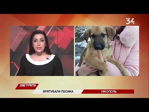 На Днепропетровщине спасли щенка, который застрял головой в заборе