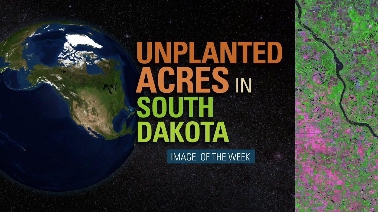 South Dakota's Unplanted Acres of 2019