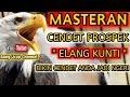 Masteran Cendet Prospek  Elang Kunti  Bikin Cendet Anda Jadi Ngeri  Mp3 - Mp4 Download
