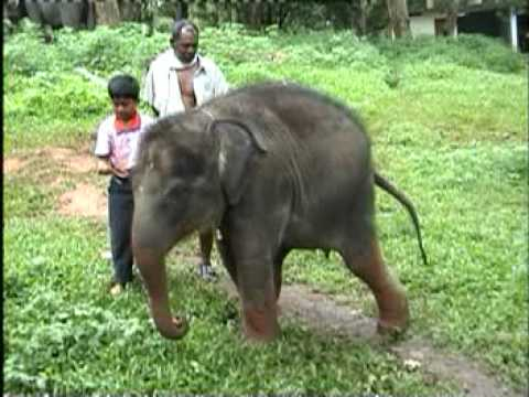 BABY ELEPHANT KERALA - YouTube