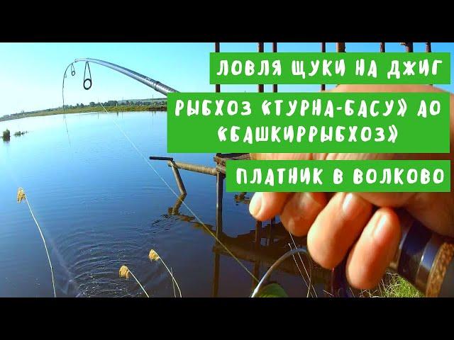Ловля щуки на джиг. Платник в Волково (рыбхоз «Турна-Басу» АО «Башкиррыбхоз»)