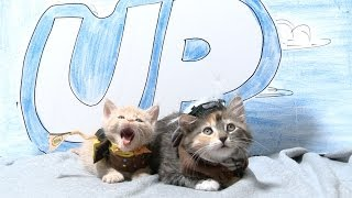 Repeat youtube video Disney Pixar's Up (Cute Kitten Version)