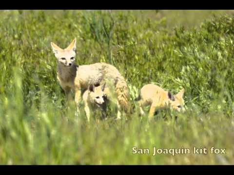 Stop 7 of 12 in Los Vaqueros Guide: Grassland