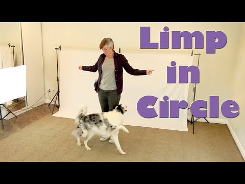 Dog Trick Limp in a Circle - Dog Training