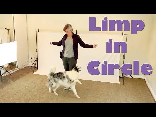 Limp in a Circle - Dog Tricks Training