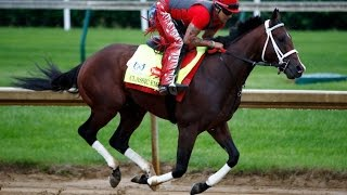 2017 Preakness Stakes Contenders - Classic Empire  Horse Preview & Highlights