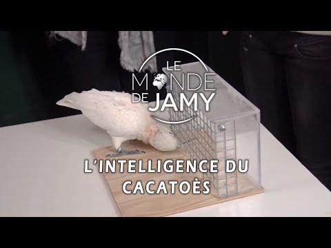 Figaro, Un Cacatoès Plus Qu'intelligent ! - Le Meilleur Du Monde De Jamy
