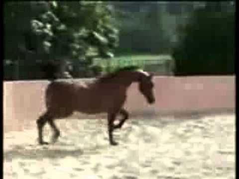 Не лошадь, а сказка! Красота!