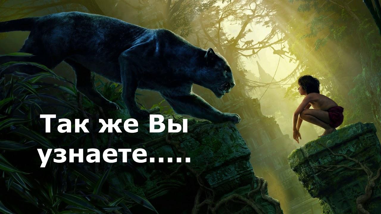 Буктрейлер «Маугли»