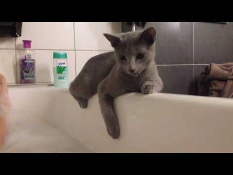 Russian Blue Cat at bathtub