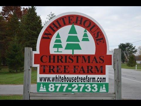 Whitehouse Christmas Tree Farm Opening Day 2014, Wheeler Farms