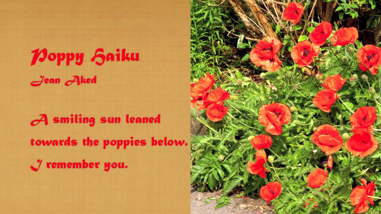 Poppy haiku poetry by jean aked youtube poppy haiku poetry by jean aked mightylinksfo