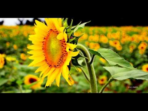 Sooryakanthi Pushpamennum Super hit old Christian Devotional song by K J Yesudas