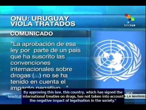 Marijuana legalisation in Uruguay breaks international treties: INCB