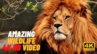 Ultimate Wild Animals Collecti…