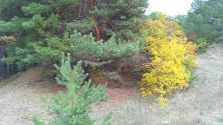 Осенний лес...