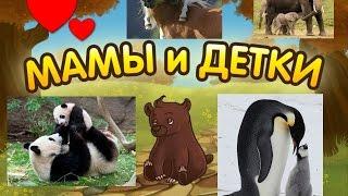 Развивающий, обучающий мультфильм Мамы и детки Учим животных