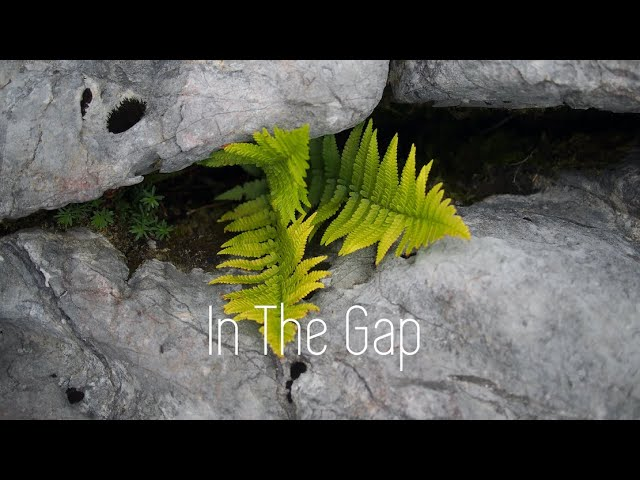 In The Gap