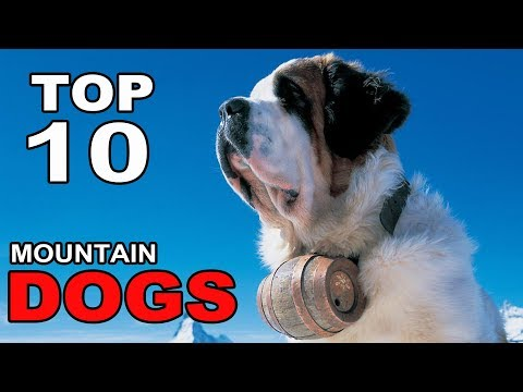 Top 10 Mountain Dog Breeds