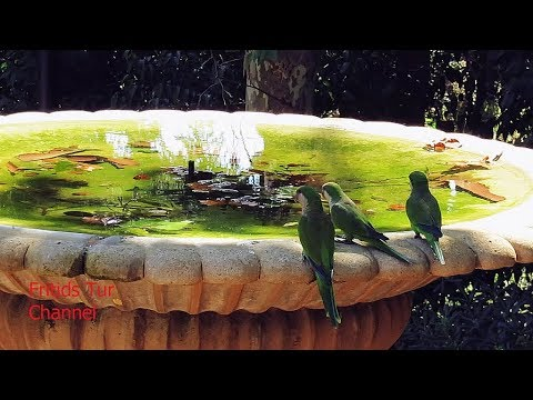 Barcelona park - Baby Quaker Parrots - Feeding