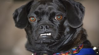Funny Angry Dogs - Angry Dogs Compilation