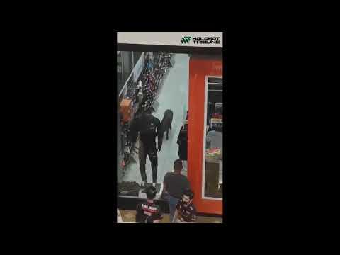 Gempar babi sesat masuk pusat beli belah