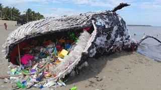 ظهور هذا الحوت على الشاطئ صدم العالم أجمع