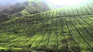 Cameron Highland tea farm view