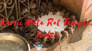 Karni Mata Rat Temple Deshnoke, Rajasthan India