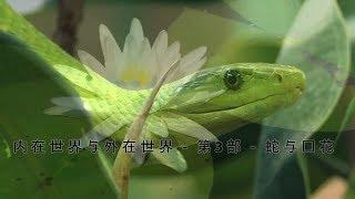 "内在世界与外在世界 - 第3部 - 蛇与莲花 - Inner Worlds Outer Worlds Part 3 ""The Serpent and the Lotus"" (Chinese)"