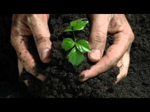 SNC2D8 ONE WORLD: Organic Fertilizer
