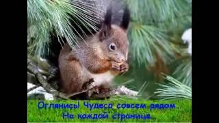 Н  Сладков  Лесные сказки
