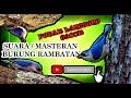 Suara Masteran Burung Rambatan Mantap Untuk Gacoan Lomba Pasti Nembak Gacor  Mp3 - Mp4 Download