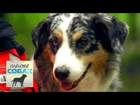 Собаки-спасатели. Планета собак 🌏 Моя Планета