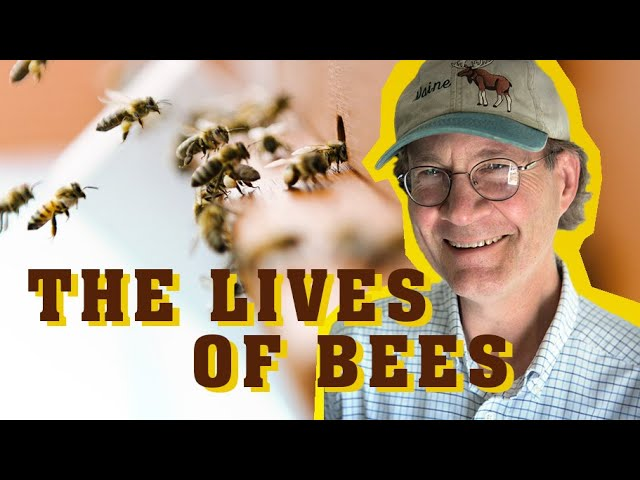 ∞ The Lives of Bees