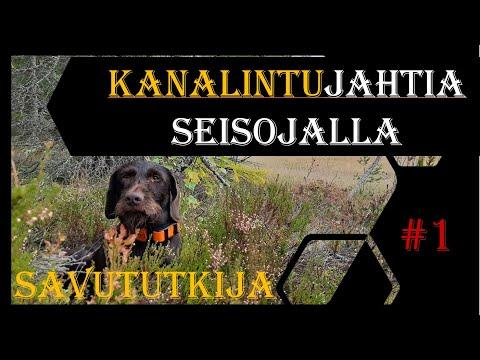 Kanalintujahtia Saksanseisojalla - German Pointer: Grouse And Capercallie Hunting , Part 1