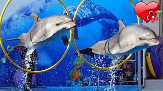 Супер 🐬 ШОУ ДЕЛЬФИНОВ 🐬 Дельфинарий Немо 🐳 Nemo