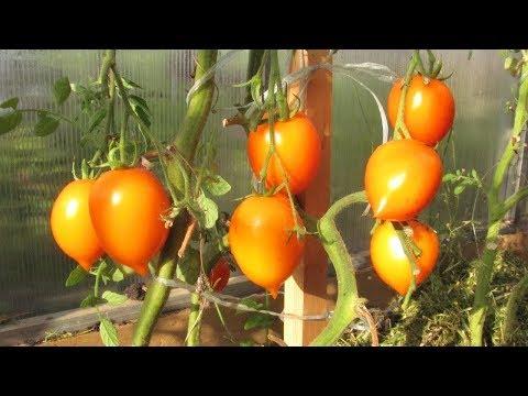 Желтые помидоры - сплошная польза