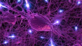 Значение нервной системы. Урок биологии.