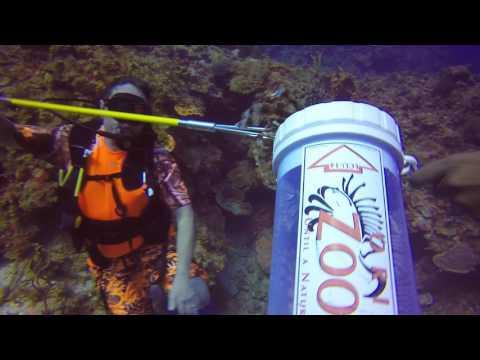 Lionfish huntung Jamaica