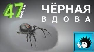 Как рисовать паука Чёрная вдова(В этом видео вы наглядно увидите, как рисовать паука. Группа VK - http://vk.com/public43263126 Музыка - Андрей Олейник..., 2013-06-10T12:06:49.000Z)