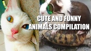 CUTE and FUNNY Animals compilation 😍